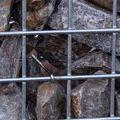 Stenen voor schanskorf