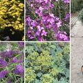 Het grote boerenborder tuinplanten pakket