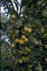 Sierappelboom tuinplanten borderpakket