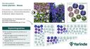 Beplantingsplan blauw halfschaduw