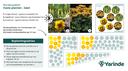 Beplantingsplan geel halfschaduw