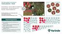 Beplantingsplan rood prairie