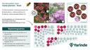 Beplantingsplan roze bijvriendelijke tuinplanten
