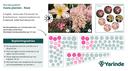 Beplantingsplan roze halfschaduw