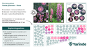 Beplantingsplan roze zon