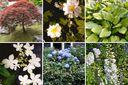 compleet tuinplanten pakket