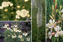 borderpakketten vaste planten wit prairietuin