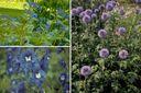 zon blauwe bloeikleur bloemen vaste planten borderpakket