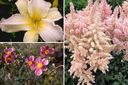 Roze halfschaduw tuinplanten borderpakket