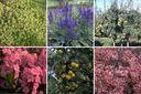 compleet pakket met diervriendelijke tuinplanten vogels vlinders bijen