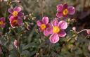 Leuke bloemen in de tuin roze