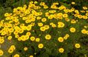 Mooie bloeiwijze gele bloemen geel droge grond