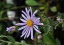 bijzondere bloemen