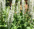 prachtige tuinplanten borderpakket