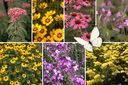 Vlindertuin tuinplanten borderpakket vaste planten pakket