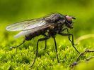 Insectenbestrijding