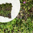 Groene Wandcassette met beplanting voor buiten 1.27 x 1.09 meter (1,38m2)
