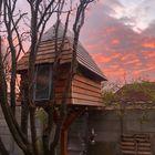 Boomhut met Red Cedar Houten dakpannen