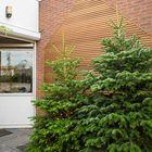 Echte kerstboom kopen online Nordmann spar