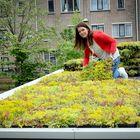 groen dakbedekking met sedum dakcassettes van mobilane