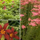 Borderpakket vaste planten rood zon