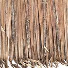palmbladeren dak hut kopen