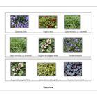 Plantsoorten live panel