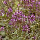 Borderpakket roze en paars vlindertuin
