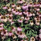 Borderpakket vaste planten vlindertuin