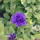 Prachtige paarse kleuren