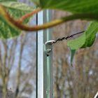Royal Well Universele beugels voor tuinkas - set 5 stuks