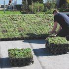 sedum groen dak aanleggen