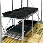 Royal Well Maxi Grower 125 - 125 x 60 x 75 cm, blank