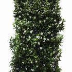 toscaanse jasmijn haagplant wit