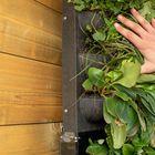 verticale wandmodule met groene beplanting