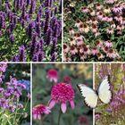 Vlindertuin - paars en roze