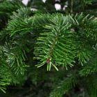 Sfeerfoto kerstboom takken