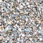 schone schelpen 10 - 20 mm