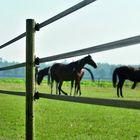 Gallagher-powerline-lint-paarden