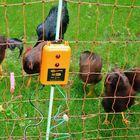 gallagher-b60-kit-voor-kippen
