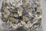Shell Oyster Talaba 1kg
