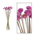 Black daisy 20pc 40cm Purple