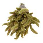 Bunch Setaria nature Natural (grootverpakking 3 normale bossen)