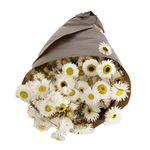 Bunch Acroclinium nature - White (grootverpakking 3 normale bossen)