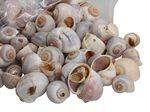 Nattai naturel schelpen 1 kg