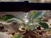 Micro irrigatie