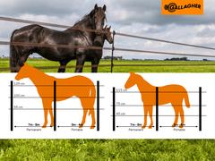 Paalafstand afrastering paarden