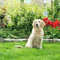 Schrikdraad voor honden