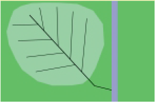 Visgraat drainagesysteem