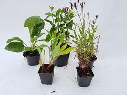 Borderpakket vlindertuin paars & roze bloeiwijze en bloeikleuren kant en klaar